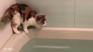 My cat jumps in the bathtub and has water
