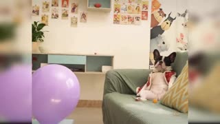 Baby cute dog funny dog compilation