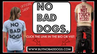 Dog training videos for beginners   New dog owner training!