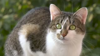 A cat with bright green eyes