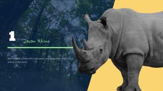 5 Most Endangered Animals