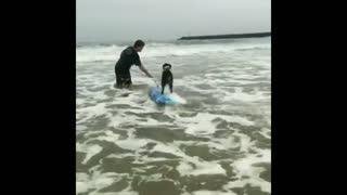 Meet the gnarliest surfing dog ever
