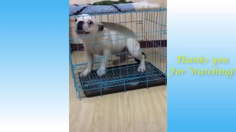Funny cats and dogs try not to laugh 😂