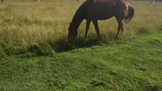 Female Brown Horse On Morning Day