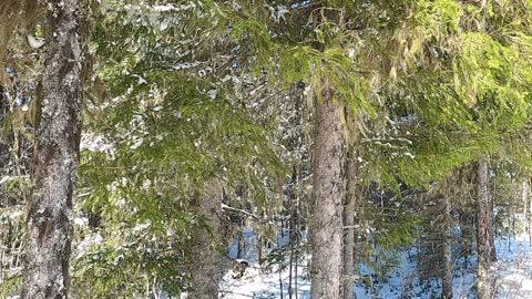 Nordic Nature Treat #15