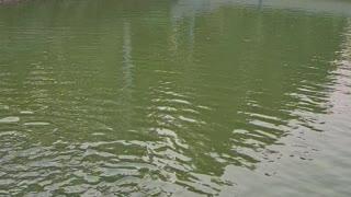 Fish farming in Thailand