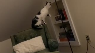 Cat Learns How to Turn on Lamp