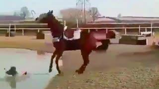 Horse funnu video!Best funny Video !Full Comedy.