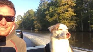 Husky co-pilot nearly falls asleep during fishing trip