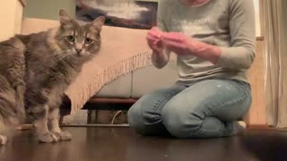 Curious Cat Can't Stop Checking Himself Out On Camera