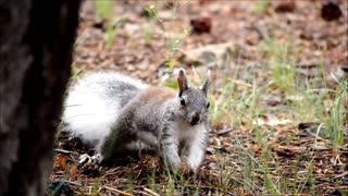 squirrel squirrel 2