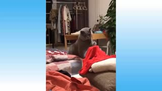 Cute dogs and cats compilation #1