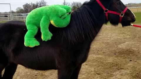 Young Horse attacks rider!