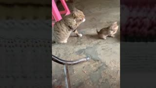 Funniest animals moment that make your day