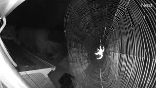 Security Camera Captures Spider Web Construction