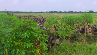 Thousand Ducks