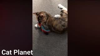 Funny cat hilarious videos 2021 🤣