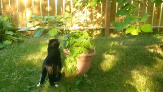 """Stray Cat Finds """"The Good Stuff"""""""