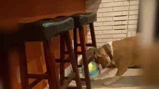 Valley likes Playing with Balls 2
