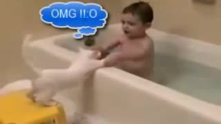 World Most Funny Animal Videos Compilation!!!!