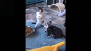 Cute kittens play together