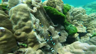 Fish Swimming in Coral Reefs