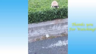 Funny cat lives you never knew existed