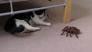 Cat Vs Giant Tarantula