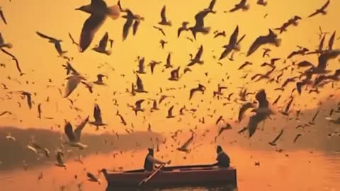 Migrating birds on the Yamuna River.