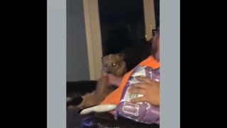 dog disfraca when its owner looks at him