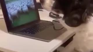 Perro Pastor teletrabajando desde casa