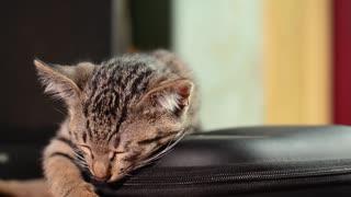 Cat Sleep and Free