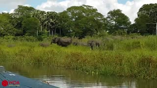Elephant saves Baby Elephant from Crocodile (INSANE)