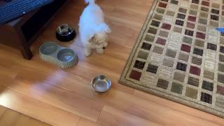 Hangry Dog Throws Bowl at Human