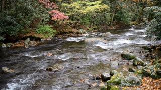 Smoky Mountains Stream