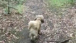 Three Dogs playing in the Wild