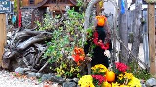 More Pumpkin People