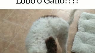 Water dog un Spain