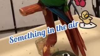 Parrot staring at nothing