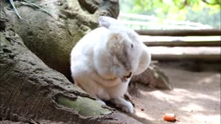 Cute white Rabbit eating