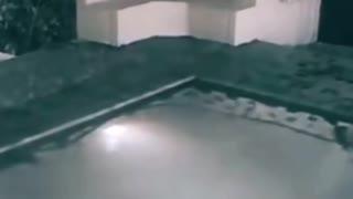 Sorprendente video chica en su piscina atacada por cocodrilo bebe