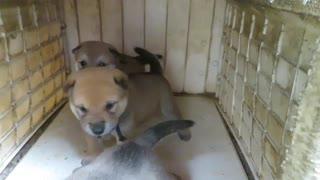 The little puppies quarreled