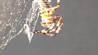 Spider aesthetic