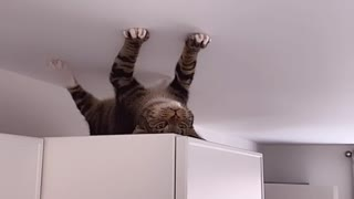 Cat Thinks its a Spider