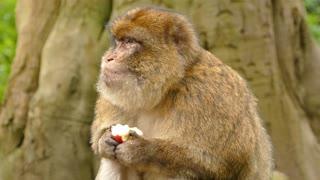 monkey monke