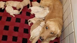 Legend Puppies 2 Weeks
