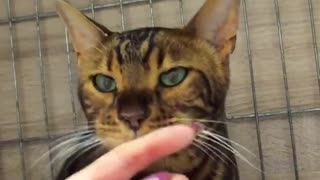 A sick cat in a veterinary clinic, received attention and affection!