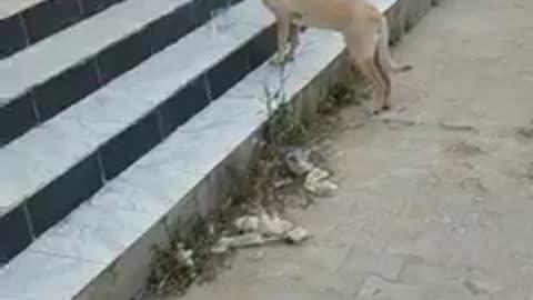 وللرحمة عنوان ساعات تلقى كلب انسان وساعات تلقى انسان كلب..