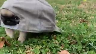 it's a turtle, a tortoise what is that !!!