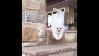 CUTE PUPPY FALLS DOWN THE STAIRS